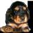 icone du forum